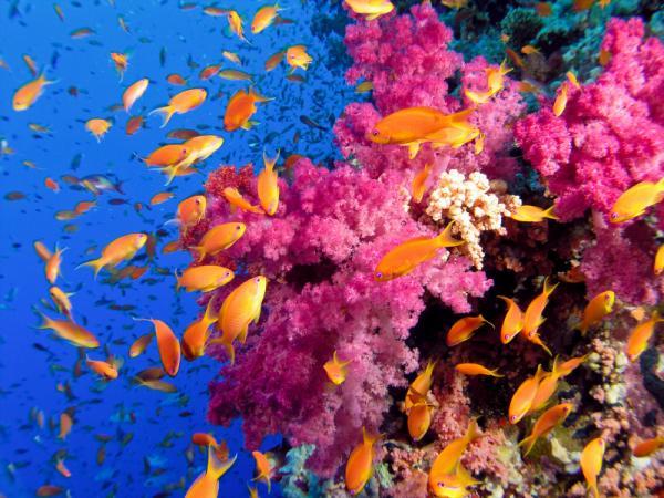 Вот так выглядит живой коралловый риф