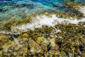 Волны могут вынести на риф